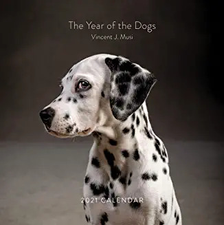 The Year of the Dogs 2021
